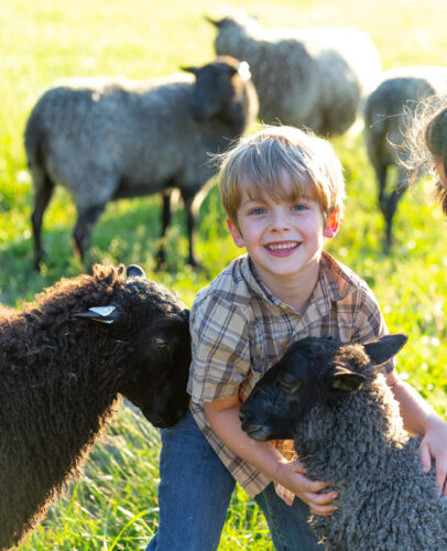 Gotland sheep from Appletree Farm, Eugene, Oregon