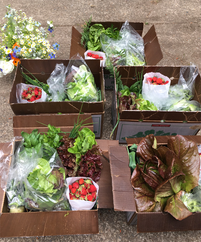 CSA boxes - produce - eggs - flowers - from Appletree Farm, Eugene, OR