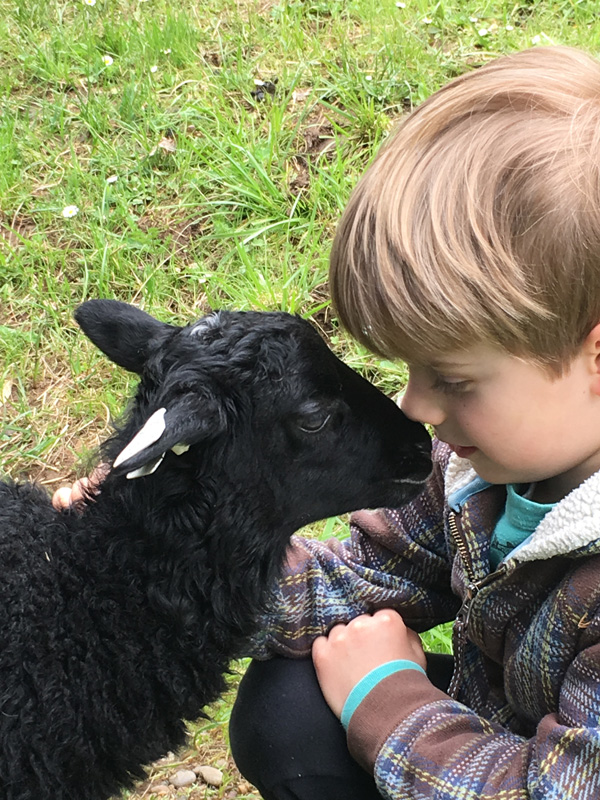Child with Gotland lamb