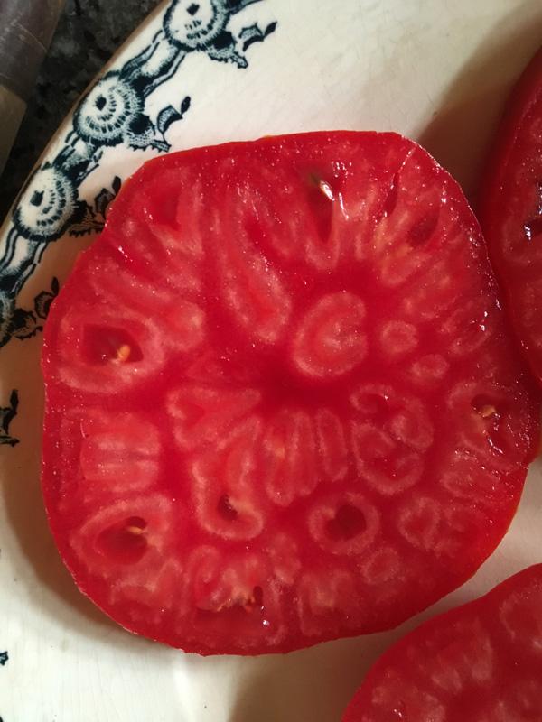 Fresh tomato at Appletree Farm, Eugene, OR