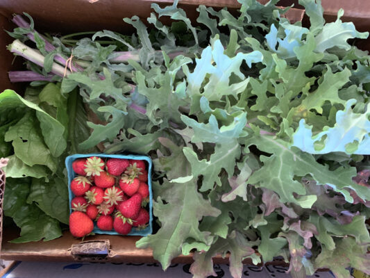 Fresh produce from Appletree Farm, Eugene, Oregon