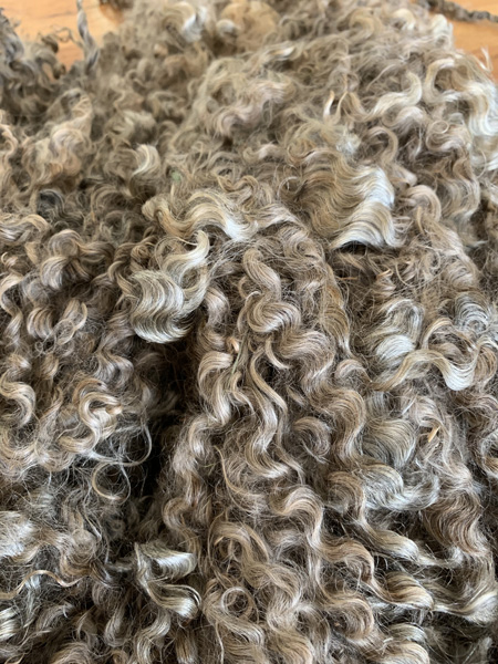Gotland fleece from Appletree Farm, Eugene, Oregon